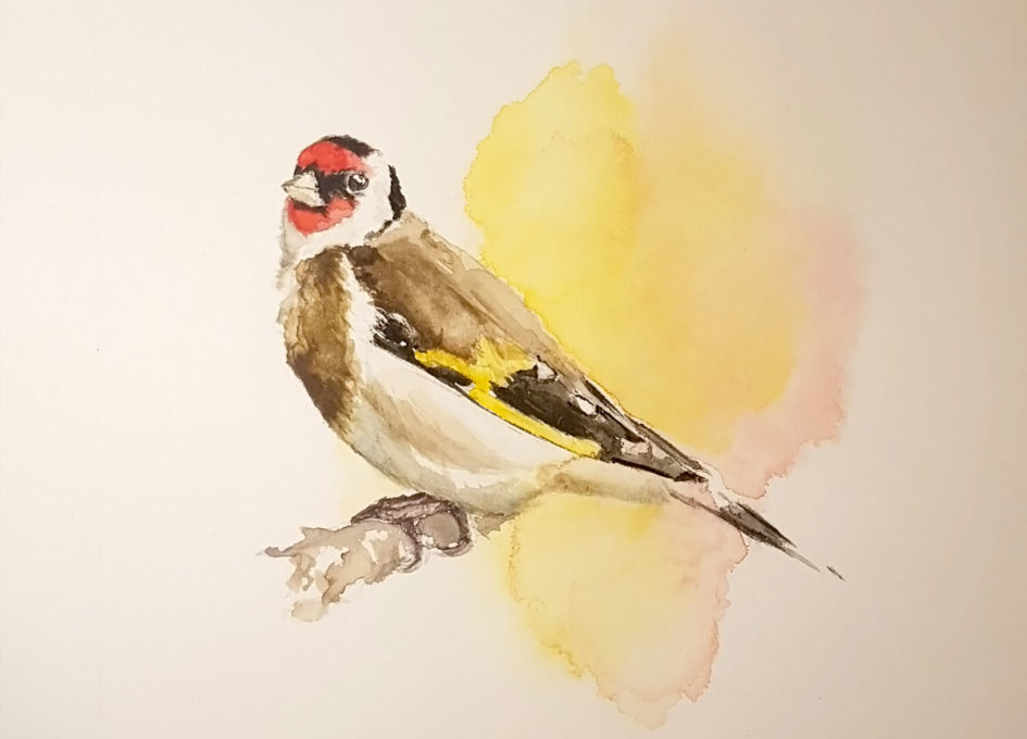 Original goldfinch watercolour painting by Annie Hall