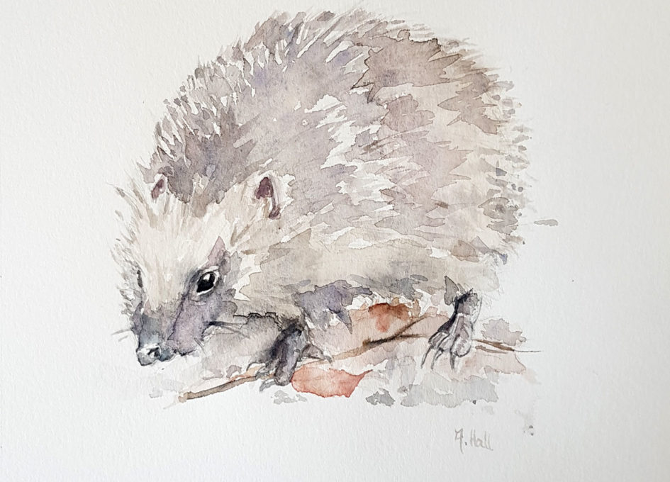 Original hedgehog watercolour by Annie Hall