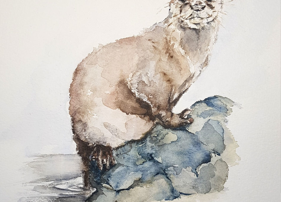 Original otter watercolour by Annie Hall