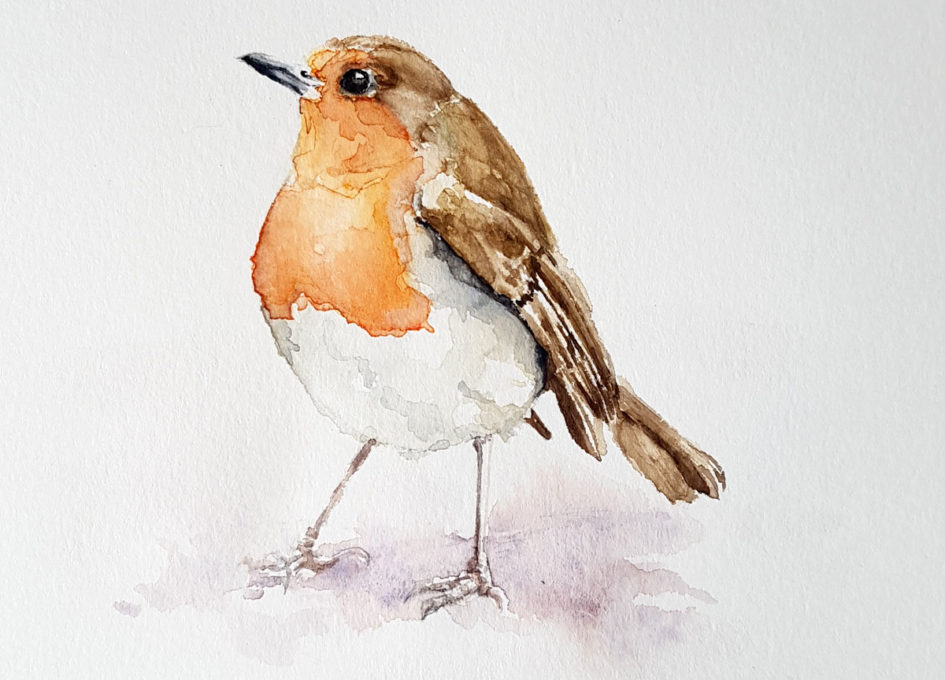 Robin redbreast watercolour painting by Annie Hall